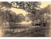 Việt Nam xưa: 1884-1885